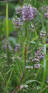 plantes_0000_Calque-8