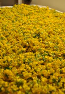 plantes_0004_Calque-4