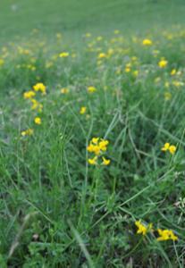 plantes_0005_Calque-3