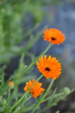 plantes_0017_Calque-6