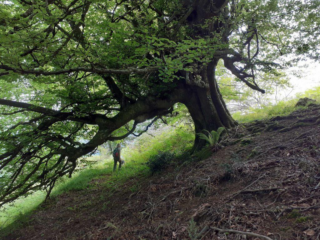 Stage ressourcement éveil des sens en forêt