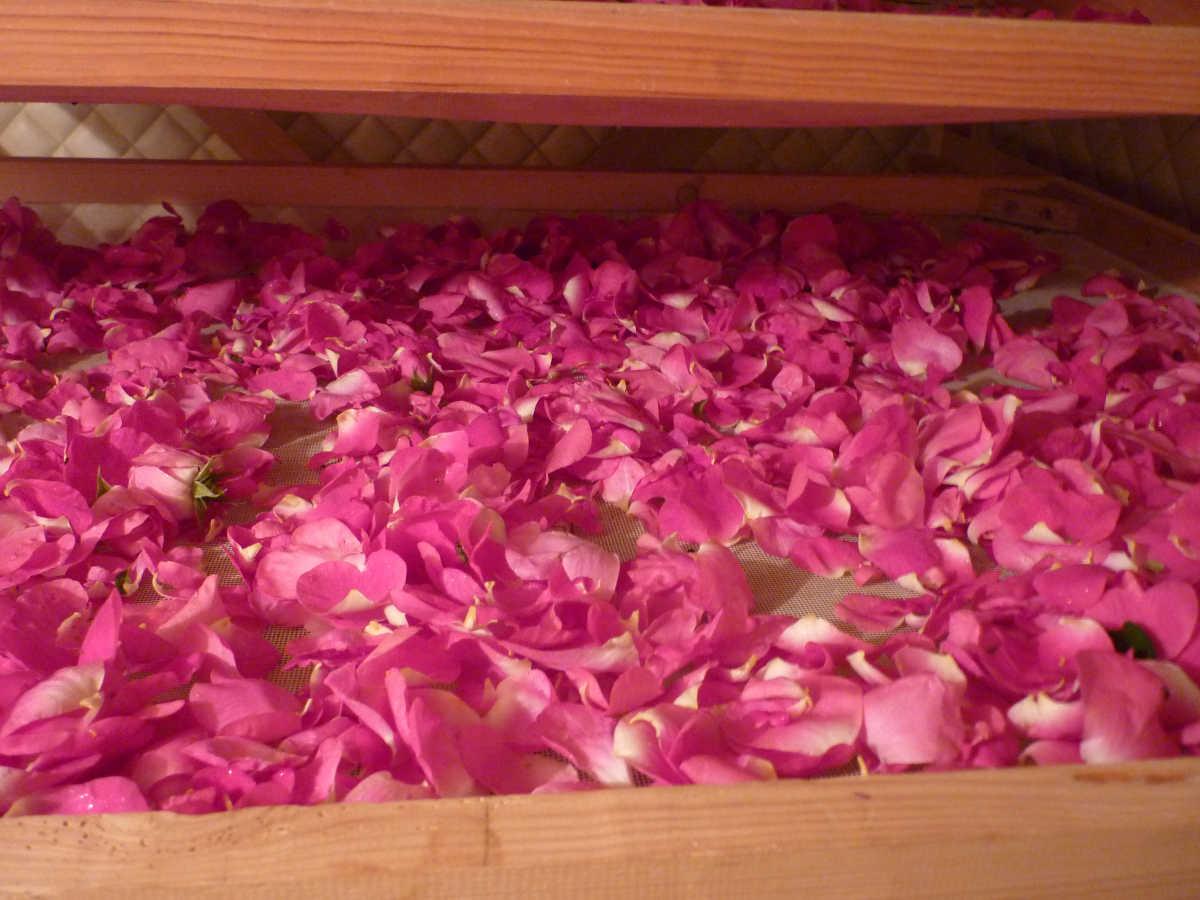 esmenote et les plantes médicinales rose