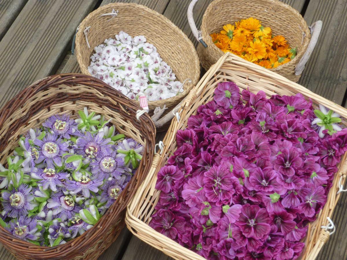 esmenote et les plantes médicinales dans des paniers